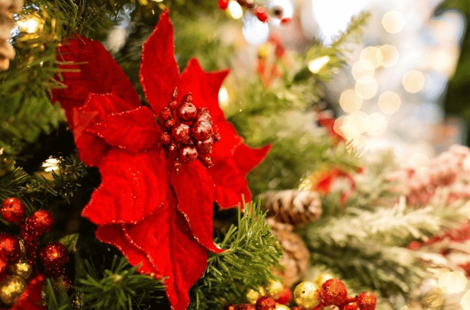 decoration-dinterieur-les-incontournables-plantes-de-noel